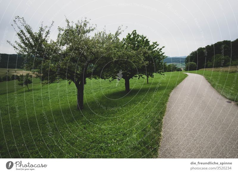 walk in the woods Fruit trees Meadow green Forest Exterior shot Nature Landscape Grass Sky Environment Plant Deserted Colour photo Day Agricultural crop off