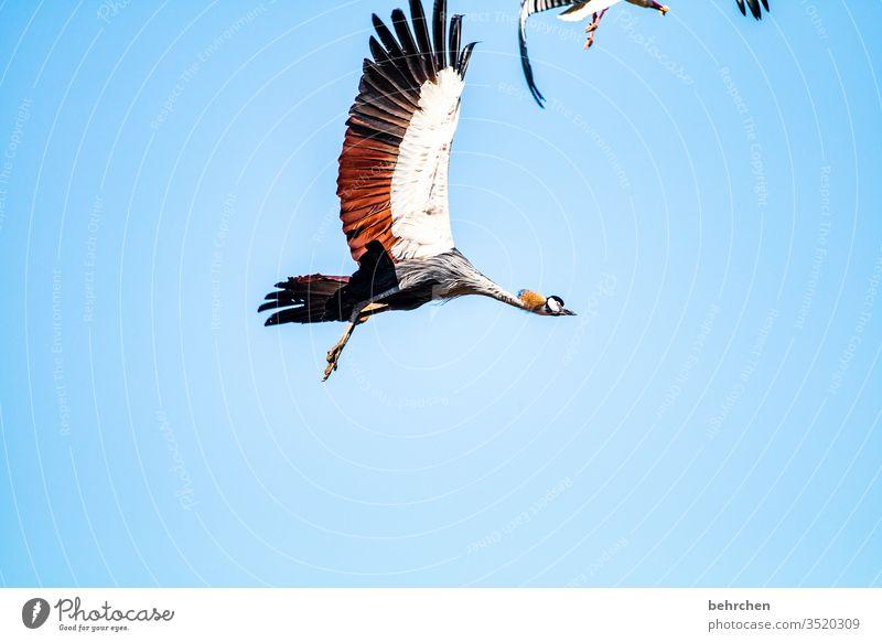 freedom Grand piano Deserted Feather Sunlight Animal portrait already Nature Blue feathers Flying Beak birds especially Freedom Sky Fantastic Colour photo
