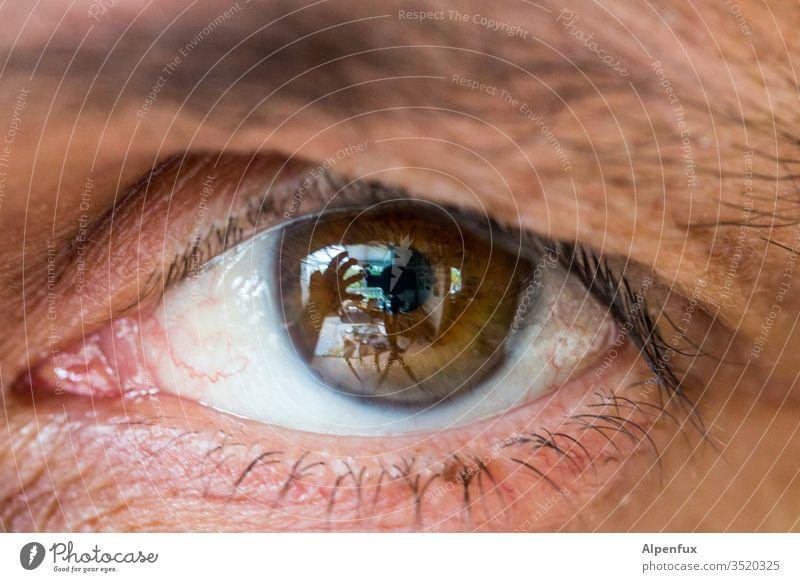 behind brown eyes Eyes Brown eyes Adults Human being Looking Man Close-up Pupil Eyebrow Eyelash Iris Vision Colour photo Detail Macro (Extreme close-up) iris