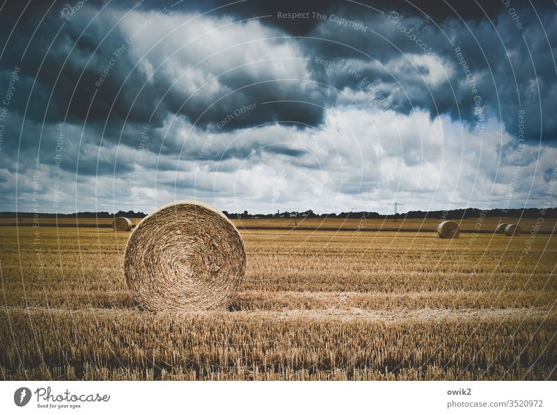 coiled Field Agriculture harvested Stubble field Bale of straw Coil Harvest Sky Clouds Dramatic Straw Landscape Grain Exterior shot Autumn Horizon Round