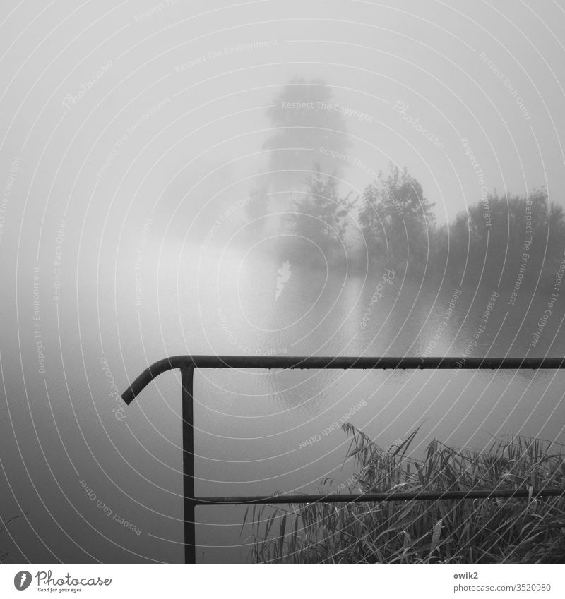 vanishing Lake foggy Foggy landscape Landscape Nature Exterior shot Deserted Morning Calm Idyll Mysterious Handrail Protection Plant huts Diffuse mist soup
