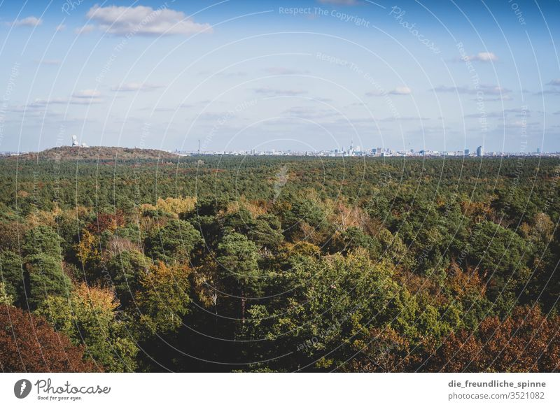 Grunewald with a view of Berlin Forest Vantage point devil's mountain Skyline Exterior shot Deserted Panorama (View) Sunlight Colour photo Beautiful weather
