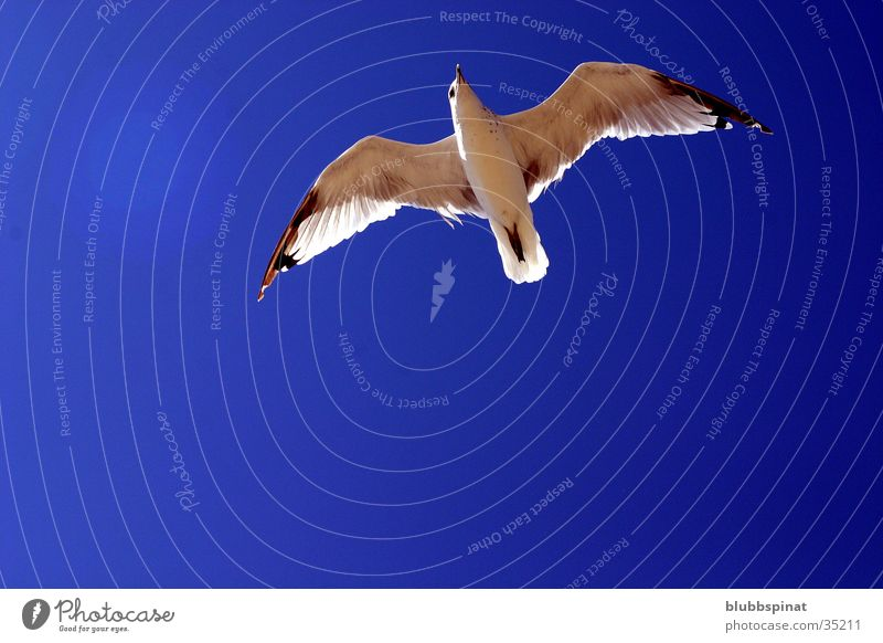 Sky Sun Blue Summer Seagull