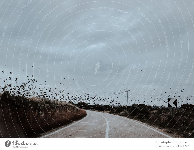 Birds Flying Over an empty Road in Sourthern Italy Reise bari brindisi italien matera winter xt2 Orange voyage Italian Landscape dolce vita Travel photography