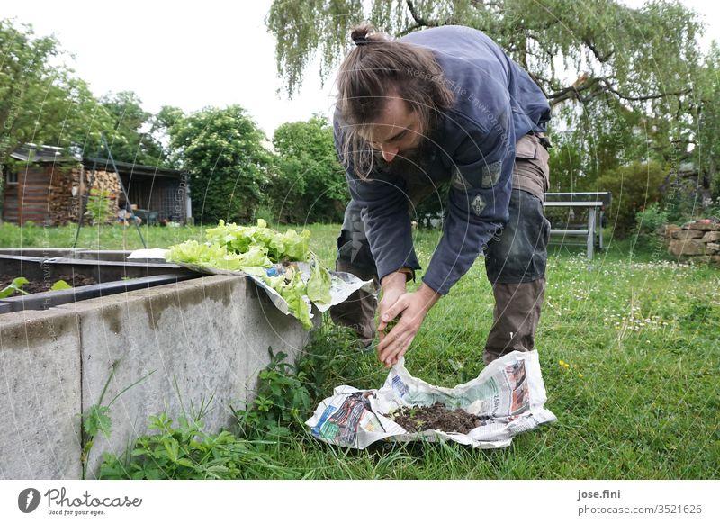 plant lettuce seedlings do gardening Garden Young man raised plants Lettuce Vegetable green Fresh Healthy Eating Domestic farming Nature Organic produce