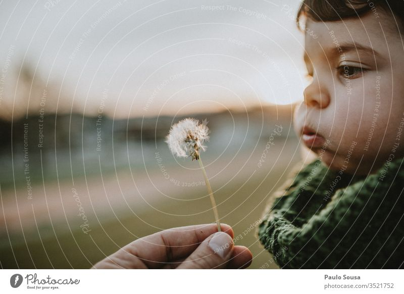 Child blowing dandelion Dandelion Caucasian Lifestyle Infancy Happy Exterior shot Happiness Nature Cute Joy kid Playing cheerful Portrait photograph Expression
