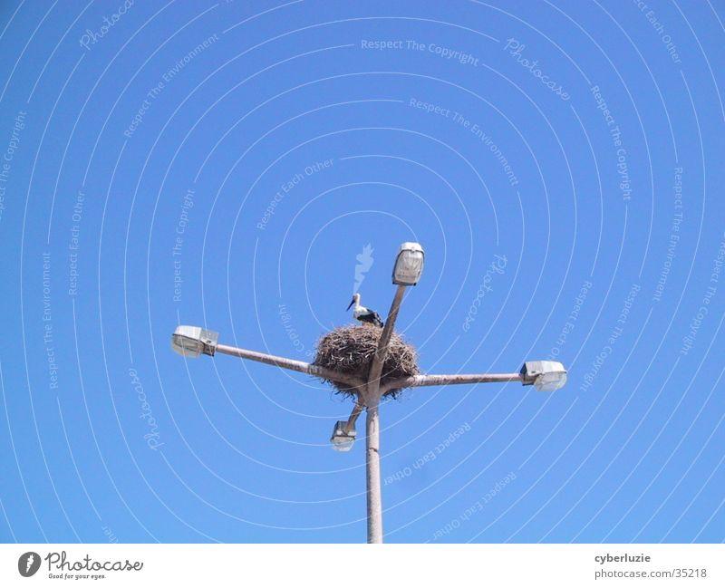 Sky Blue Lamp Lantern Nest Stork