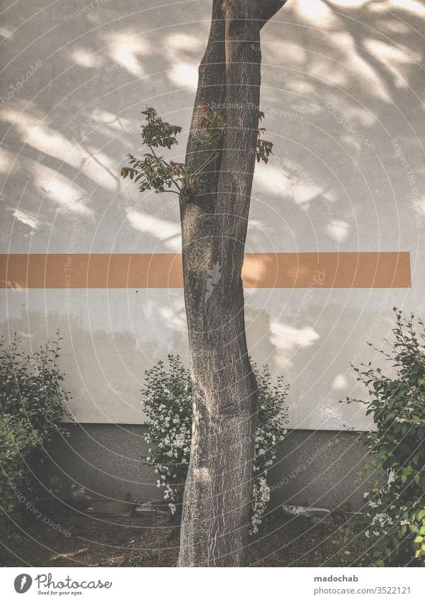holy kimbam tree Nature urban Line graphically shrubby Facade Town Wall (building) Deserted Subdued colour Exterior shot Colour photo Pattern