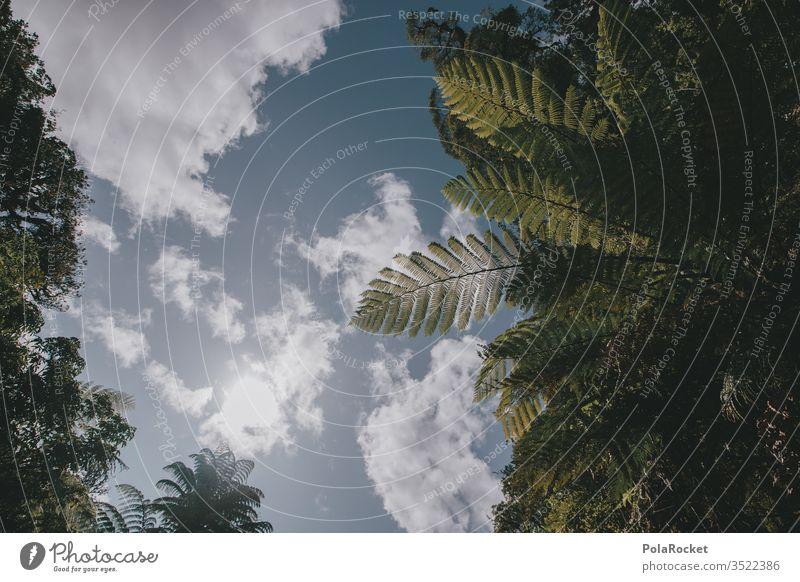 #AS# Fern Paradise Fern leaf ferns Structures and shapes green Foliage plant Shadow play Wild jungles fern growth Farnsheets fern drive fern stalk Sunlight