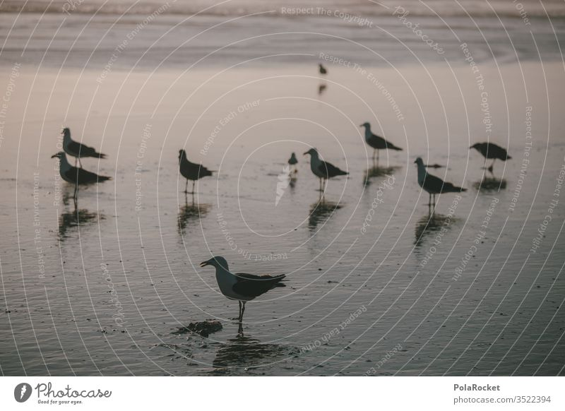 #AS# Gull idyll Seagull Gull birds Beach Twilight evening mood Many mirror Ocean flock of seagulls