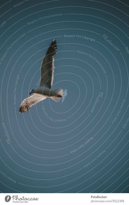 #AS# Single ? Seagull Gull birds Beach Twilight evening mood Many mirror Ocean flock of seagulls Freedom Flying Deserted Sky Grand piano move Animal conceit