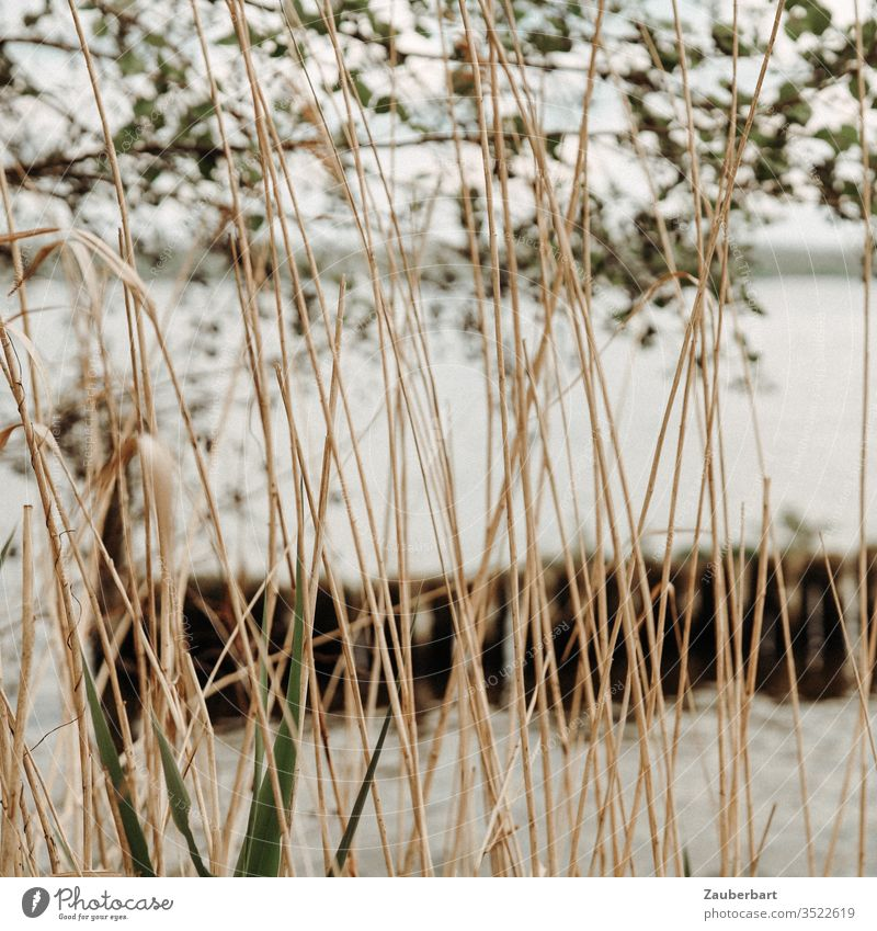 View through reeds to a lake and branches Grass Lake bank tree Nature Water twigs melancholy dream Dreaming spring Summer leaves Looking outlook Landscape