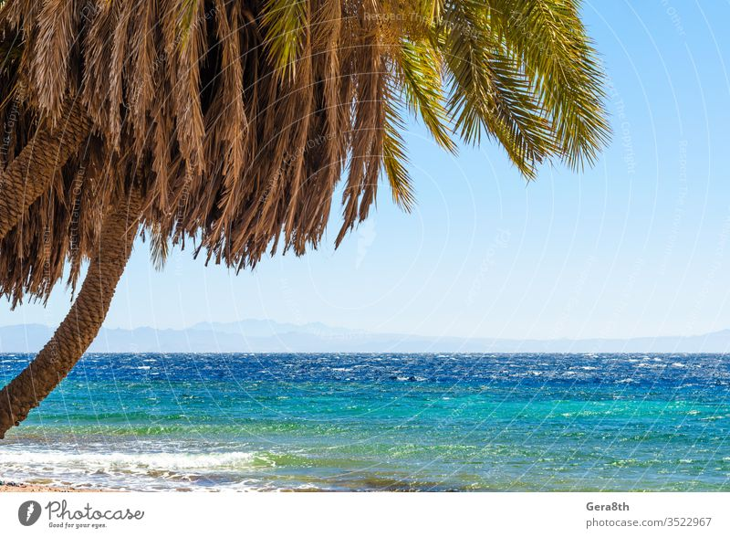 palm trees by the sea against the backdrop of mountains in Egypt Dahab South Sinai Red Sea beach blue blue water branches clear day coast exotic green heat