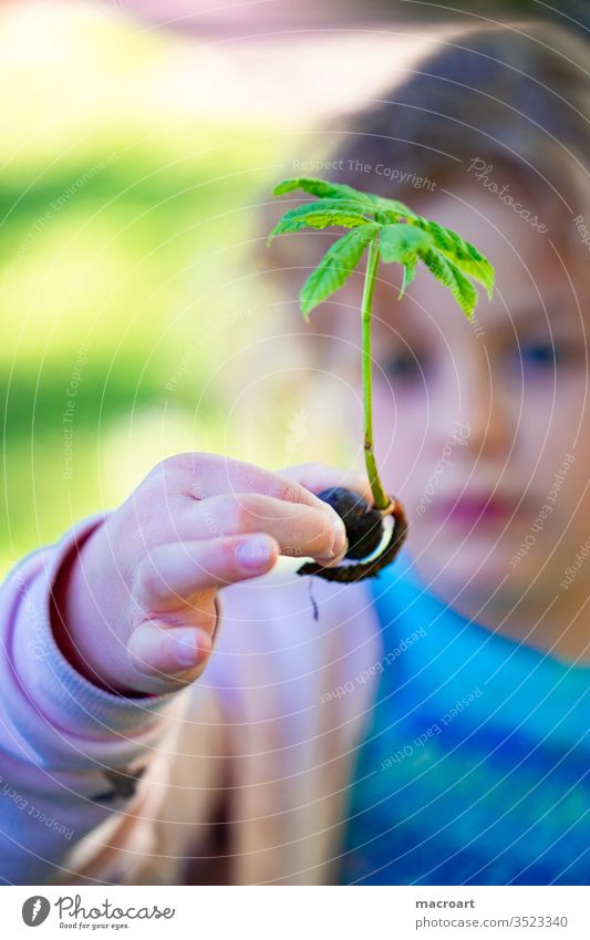 Child with chestnut tree girl Chestnut Chestnut tree Sapling plant a tree roots spring implant Study Discover reforest Forest leaves Instinct young shoot green