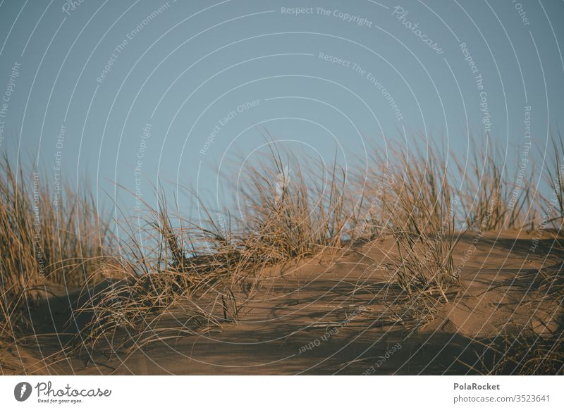 #As# Dune grass dune Marram grass dunes dune landscape Dune crest dune protection dune path Grass Beach Coast Sky Exterior shot Landscape Nature Colour photo