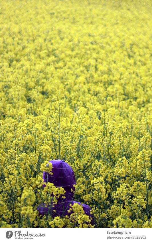 purple hood in yellow rape field Yellow Rain jacket Canola Canola field Field spring early summer Landscape Blossoming flowering field Agriculture Monoculture
