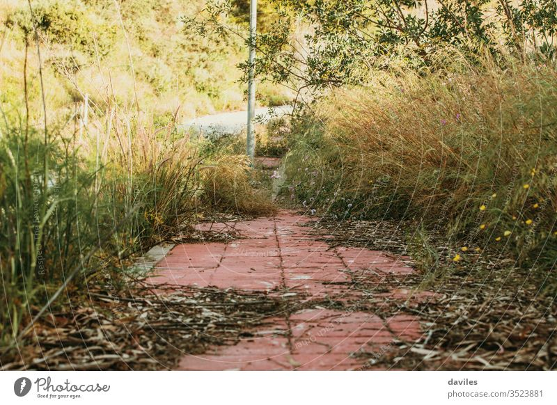 Street sidewalk with a lot of wild plants. Abandoned city. outdoor park street road landscape nature trees background outdoors architecture brick building fence