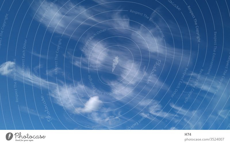 Cirrus clouds Sky Blue Steam White Clouds cirrus cloud cirrus clouds Feather Spring clouds Spring Cloud Air Exterior shots Beautiful weather Weather