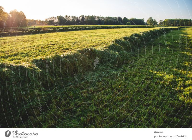when the work is done Hay Meadow Reap Field hayfield Working in the fields Agriculture Hay harvest Feed Arable land Yellow green Bright green Grass green Summer
