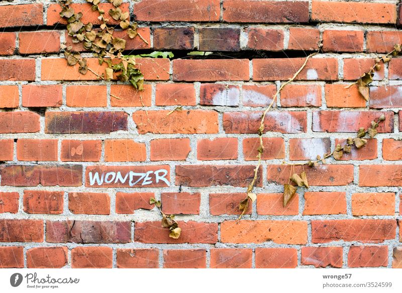 The word Wonder on a red brick wall with dried up ivy vines Word wonder Tags Graffiti Characters Wall (building) Deserted Wall (barrier) Exterior shot