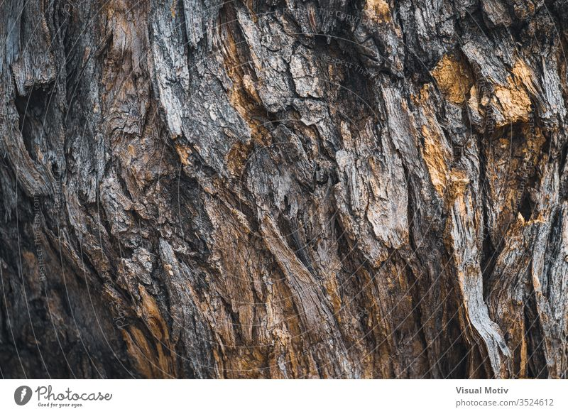 Texture of the bark of a Styphnolobium japonicum commonly known as Pagoda tree color no people detail texture textured surface bark surface nature natural