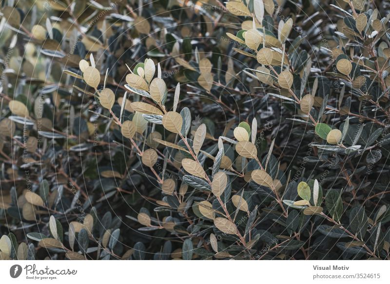 Ascending branches and green-white leaves of a shrub bush color nature natural plant leaf park garden outdoor outdoors outdoor photography exterior botanic