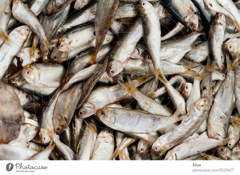 Many freshly caught fish in one pile fishing Silver Fish Near dead Deserted Fishery food Fresh Close-up Animal Fish market Subdued colour Dead animal peer Heap