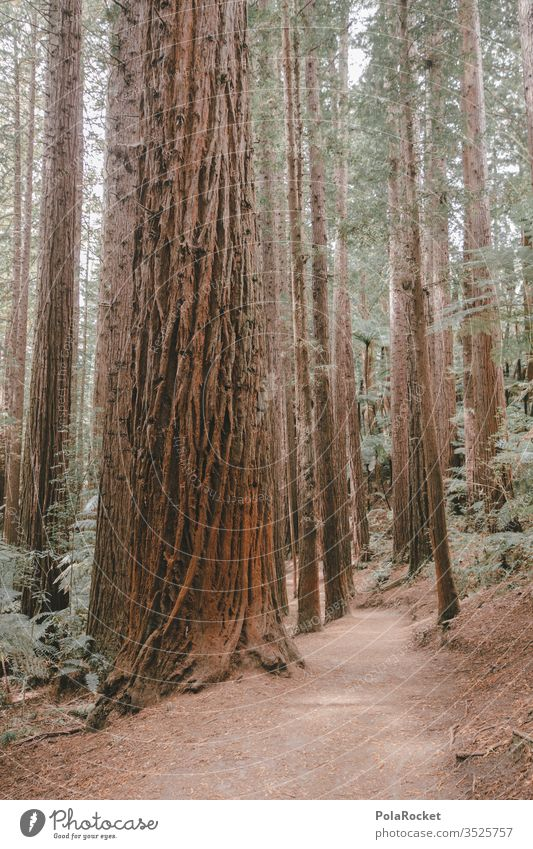#AS# RedWood Redwoods nationalpark huts bark Forest tree Exterior shot Tree trunk Nature green Forest atmosphere Edge of the forest forest soils Clearing