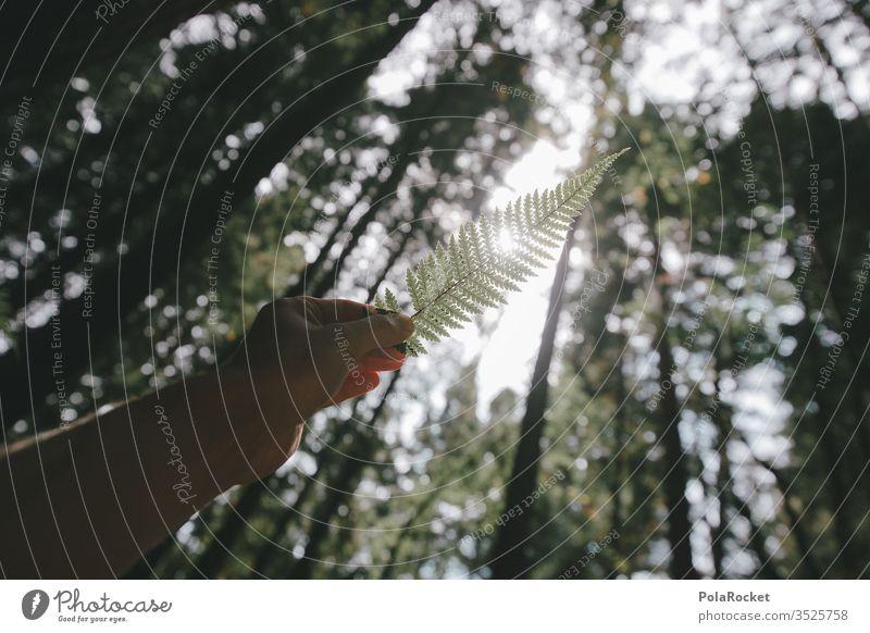 #As# fern in the light Fern Fern leaf ferns Farnsheets fern drive fern stalk by hand Retentive stop Forest Nature Nature reserve Love of nature