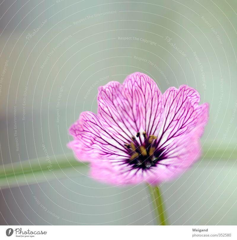 Plant Green Beautiful Relaxation Flower Calm Blossom Healthy Gray Fresh Wellness Violet Balcony Fragrance Harmonious Meditation