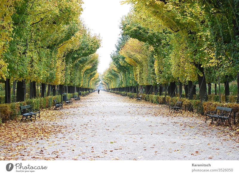 An autumn walk in the park of Schönbrunn Palace Autumn autumn mood autumn hike To go for a walk Avenue Park off huts Book leaves foliage Autumn leaves