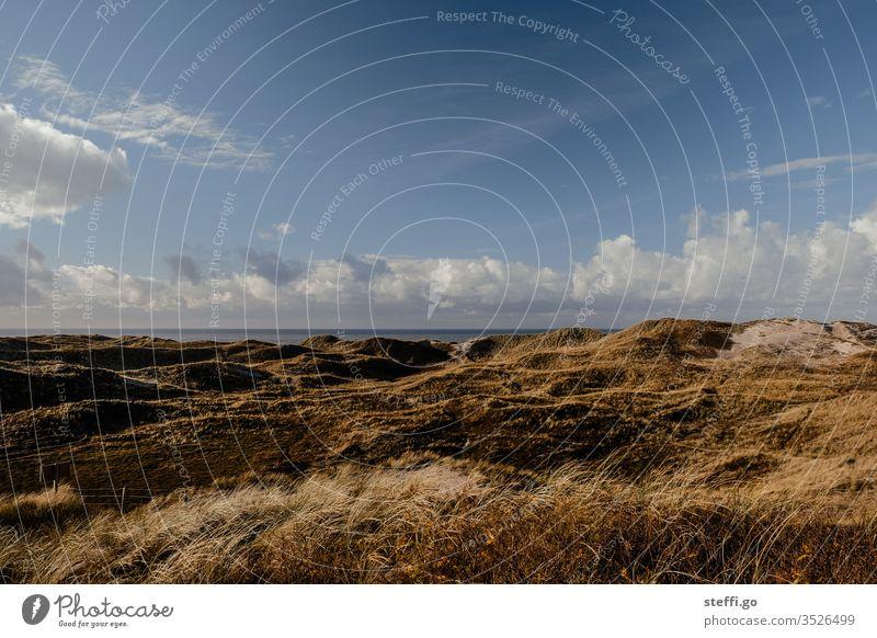Dune landscape in Denmark by the sea with blue sky Hvide Sands North Sea Marram grass dunes dune landscape Grass Environment Nature Exterior shot Colour photo