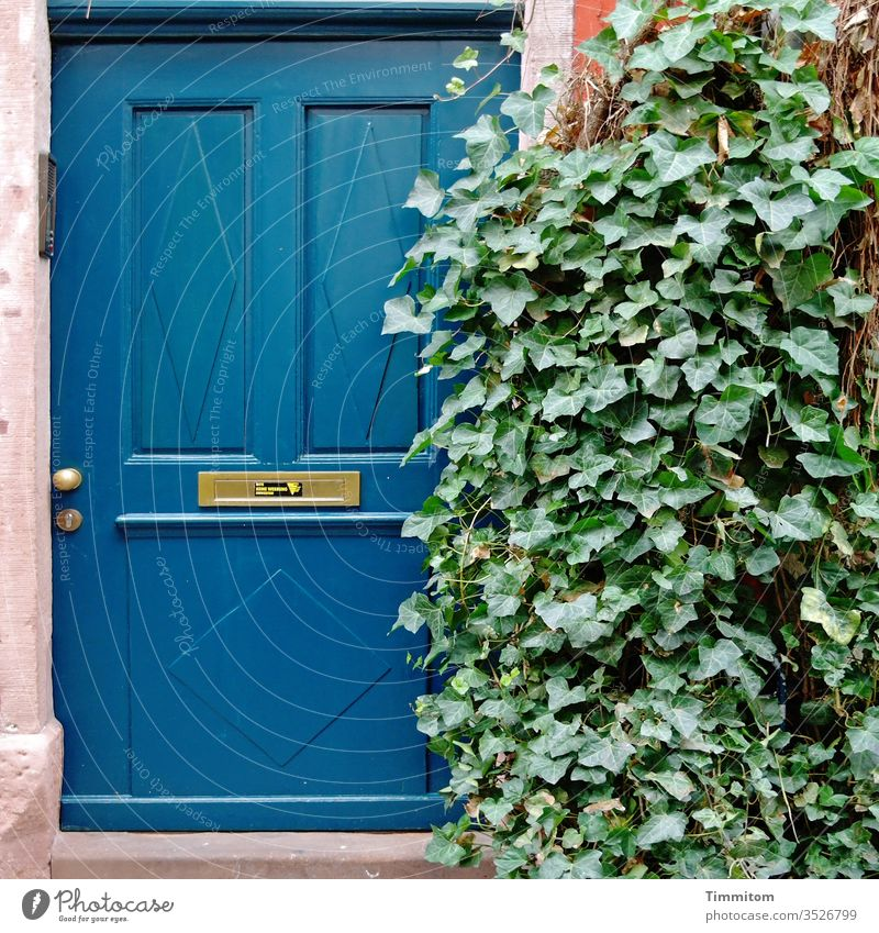 Neighbourhoods   Privacy dwell House (Residential Structure) front door Entrance Ivy Green Screening Deserted Old Blue Mailbox slot