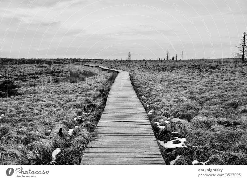 Hohes Venn Bohlen Weg in winter High venn high veins Nature Landscape Deserted Exterior shot Hiking Grass Fen Bog grasses Snow Grayscale black-and-white Plant