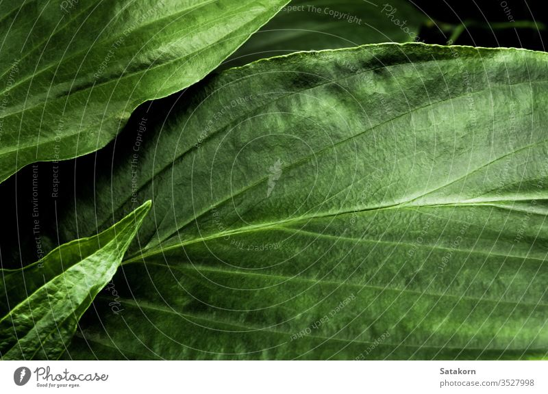 Freshness tropical leaves surface in dark tone as rife forest background green leaf nature pattern plant floral freshness fertile bountiful plantation delicate
