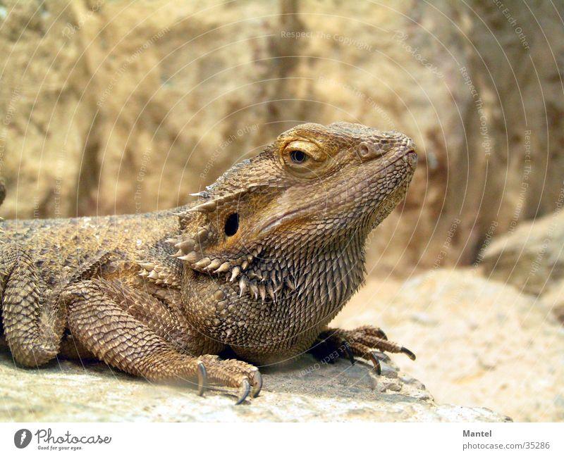 Barn Reptiles Saurians
