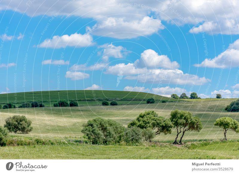 Green meadow with trees and hill on the horizon with blue sky with clouds Prado Verde Arboles Horizonte Colina Naturaleza Cielo Azul Nubes Dia Paisaje