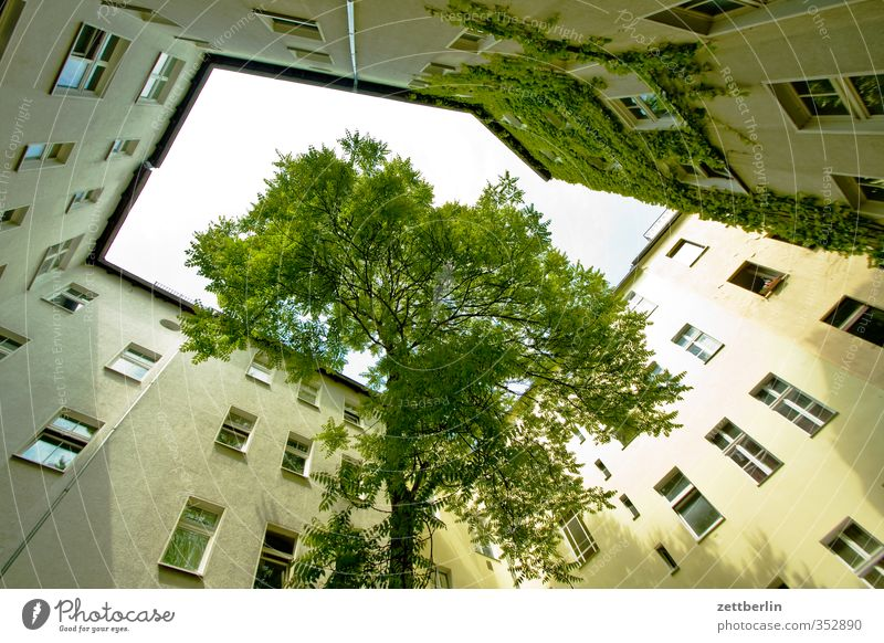 Tree in the courtyard Living or residing Flat (apartment) House (Residential Structure) Town Capital city Downtown Manmade structures Building Architecture