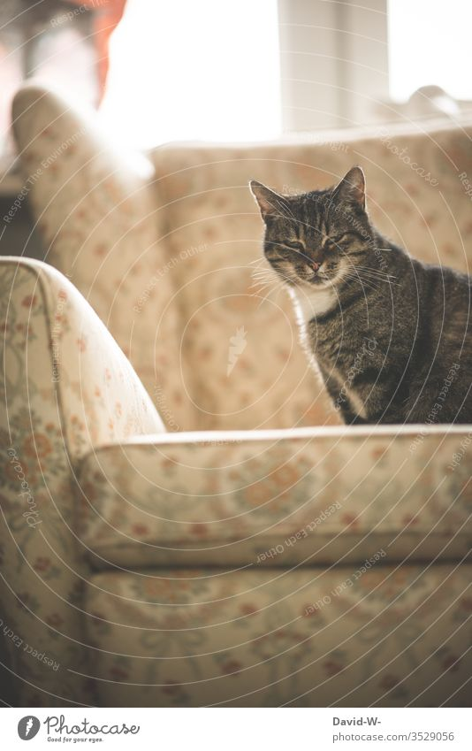 Cat sitting on an old armchair Old Armchair Rustic melancholically melancholy Past Former then at grandma's with grandmother Retro tranquillity Emanation
