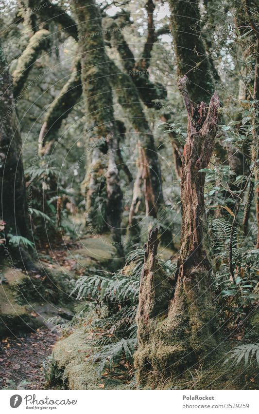 #As# forest road Forest forest soils Clearing Edge of the forest Forest walk Forest atmosphere tree huts green Nature Exterior shot Colour photo Landscape