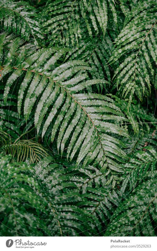 #As# Faaarn! Fern Fern leaf ferns fern growth Farnsheets fern stalk fern drive fern branch Nature green New Zealand