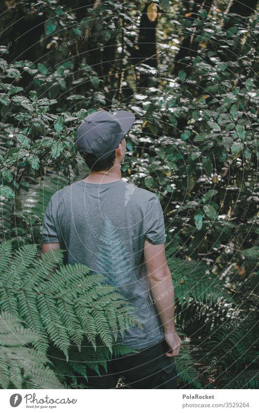 #AS# Fern Discoverer New Zealand green Nature fern branch fern drive ferns fern growth Farnsheets Fern leaf fern stalk New Zealand Landscape fumble feel Plant