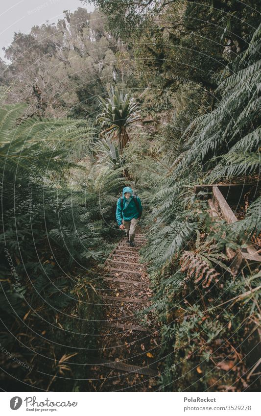 #AS# Green walk Travel photography mightily Future Open Overgrown seal Miracle of Nature Sublime Above Love of nature Natural phenomenon Fern leaf stretch