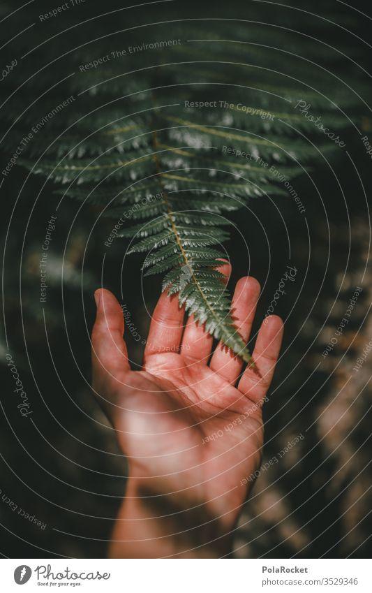 #AS# FARN! Fern Fern leaf ferns fern growth Farnsheets fern branch fern stalk fern drive Nature Plant green by hand Experiencing nature feel fumble