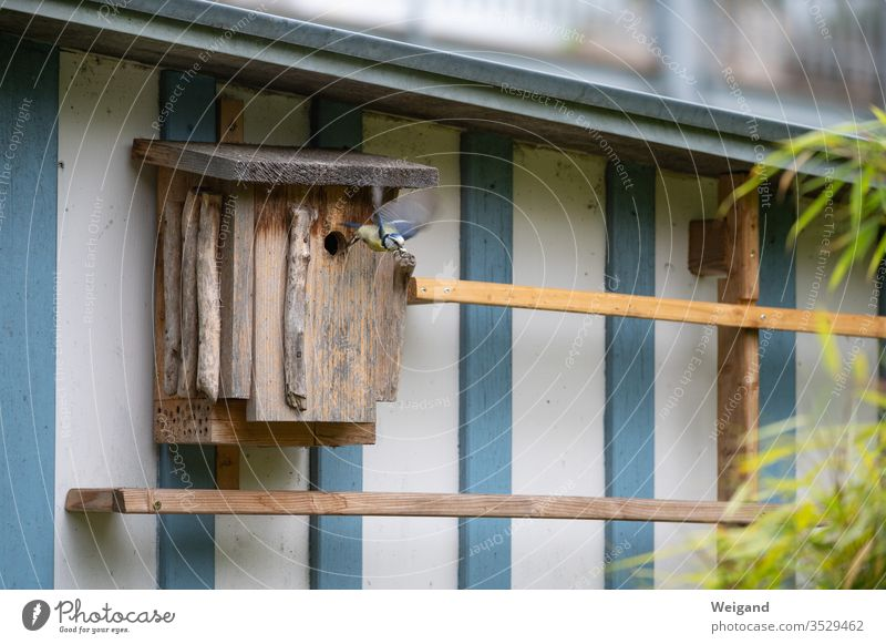 nesting box Nesting box Tit mouse spring Diligent Garden Idyll young generation Parents