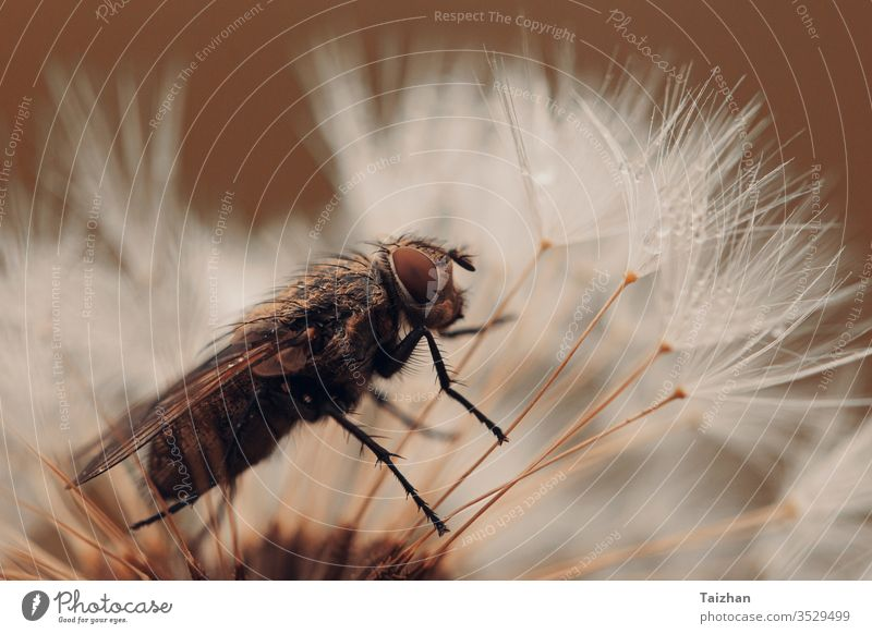 Fly and dandelion clock . Orange toned . Nature concept seed flower nature background blossom fireworks fly wind abstract flora floral macro plant summer