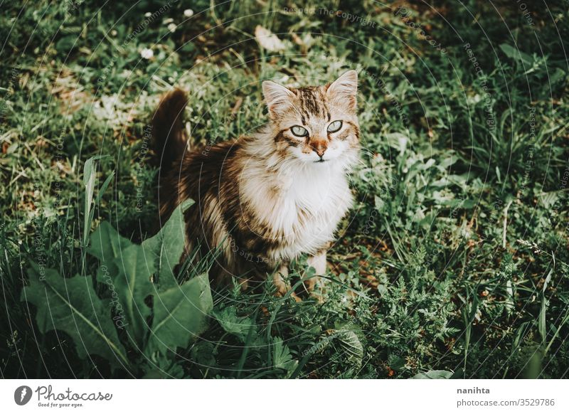 Amazing and beautiful outdoor cat Cat already stray cat alley cat Pet care Animal Mammal Free Outdoors Nature natural Eyes Face Breed General European