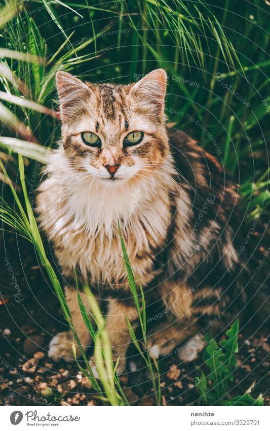 Amazing and beautiful cat outdoors stray cat alley cat pet care animal mammal domestic animal free nature natural eyes face breed common european european cat
