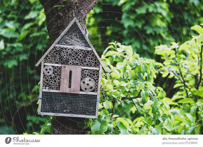 Bee hotel in the garden bee hotel wasp Bumble bee Insect Summer Animal flowers Flying Nature Grand piano Garden Accommodation tree Idyll Exterior shot green
