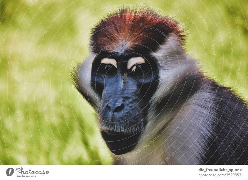 monkey eye Animal Exterior shot Wild animal Animal portrait Day Monkeys Africa Nose Face Pelt Zoo Nature Eyes Close-up Colour photo Animal face Looking Deserted
